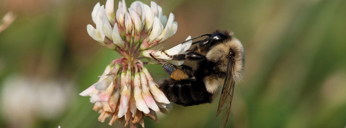 Each year, pollinators such as bees contribute $24bn to the US economy