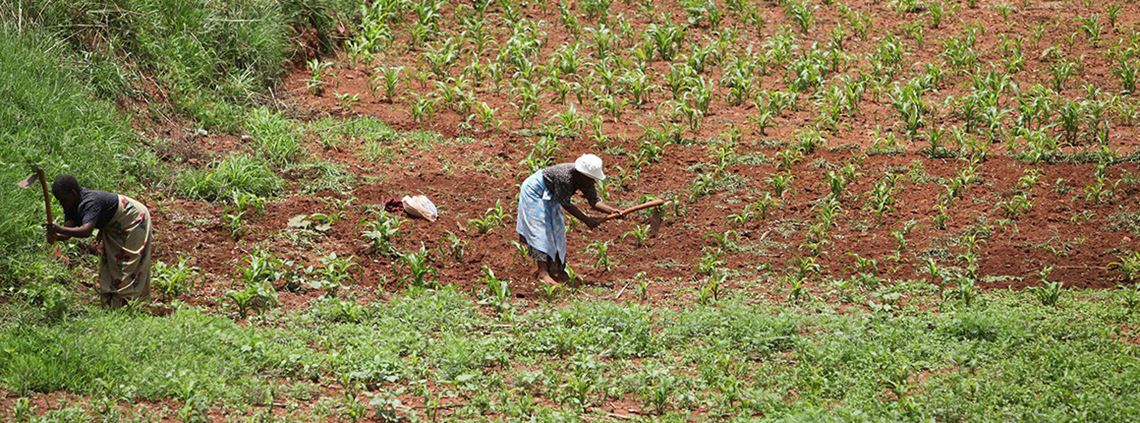 Women and children now farm land in Zimbabwe that was once worked by tractors © AP/PA Images