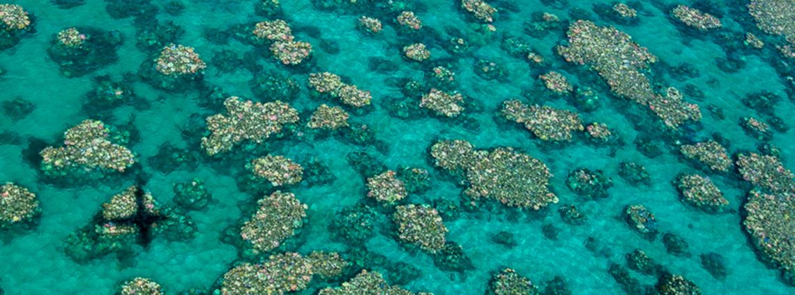 Scientists recorded bleaching at 800 individual coral reefs ©Ed Roberts, ARC Centre of Excellence for Coral Reef Studies