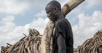 Illegal wildlife trade is worth $15-$20bn globally making it the fourth largest international trade crime ©PA Images