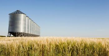 Egypt's state grain buyer has been importing large stocks of wheat to boost reserves ©123RF