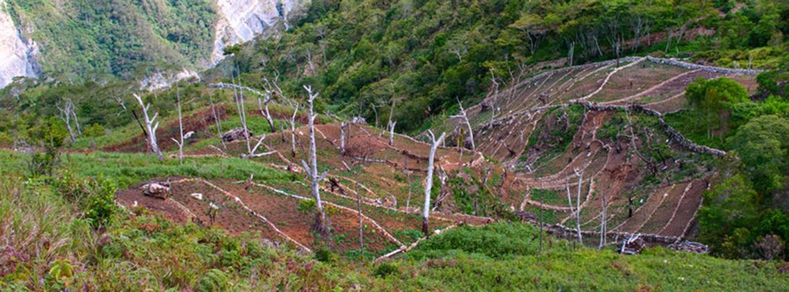 Global Witness said PNG's government had illegally handed over indigenous land to logging companies © 123RF