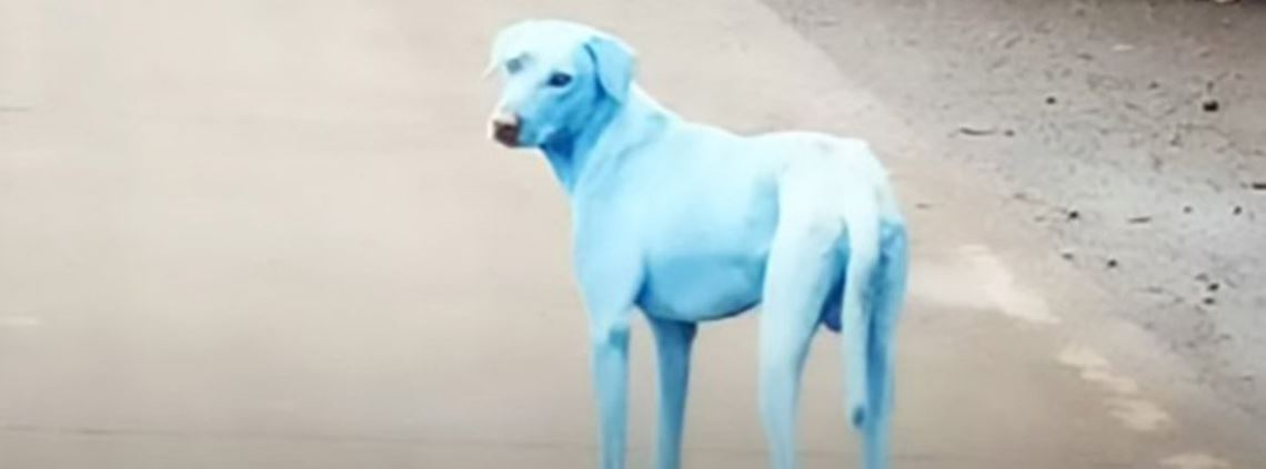 Activists complained to the authorities after residents spotted the blue dogs © CEN