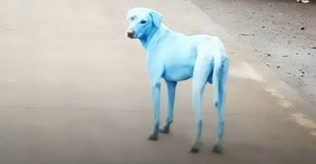 Local activists filed a complaint to the MPCB after residents spotted the blue dogs © CEN