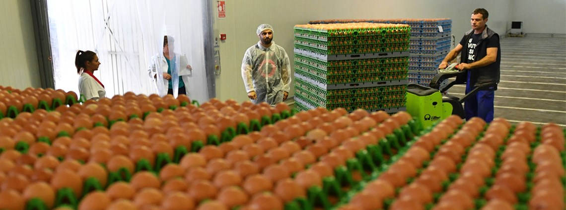 Thousands of eggs were destroyed as a food scare spread across the world ©AFP/Getty Images