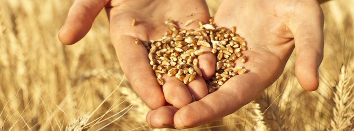 Egypt is the world's biggest wheat importer © 123RF