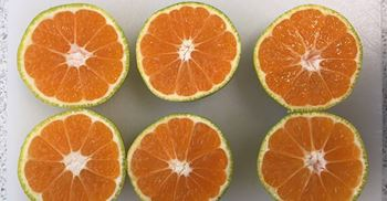 Higher early season temperatures have slowed down the natural process, leaving the satsumas green © Tesco