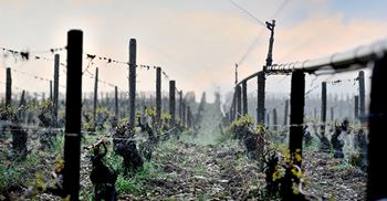 The EU's wine grape harvest shrunk due to spring frost and summer heat waves © PA Images