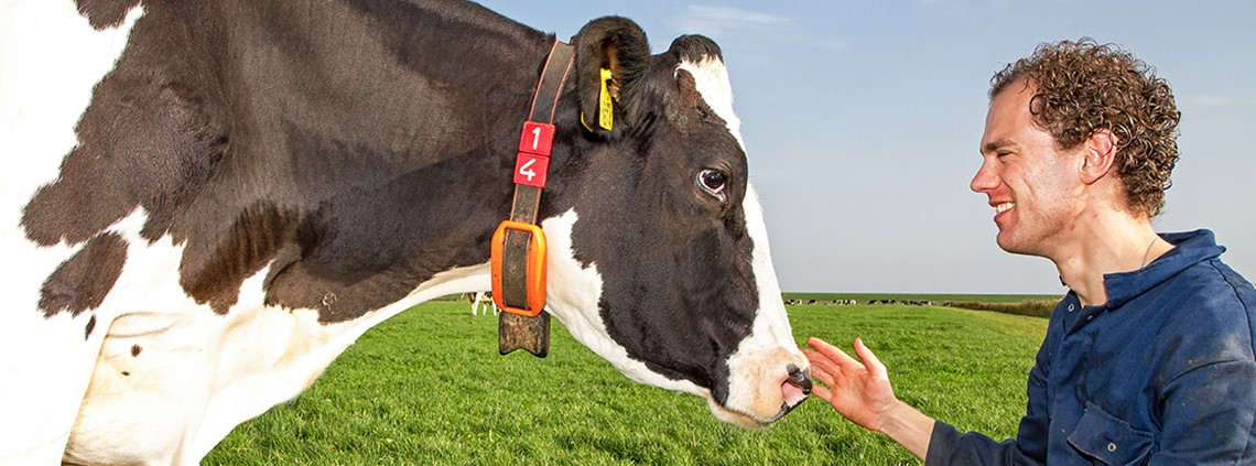 Connectera has created an activity tracker for cattle ©Justin Sinner