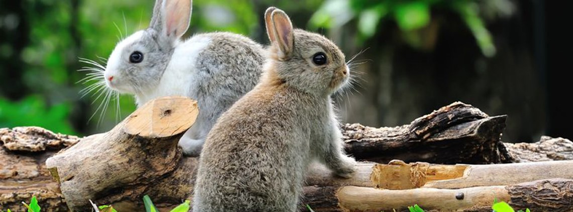 Rabbit fur has been identified in products labelled faux fur © 123RF