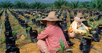 The palm oil industry is the 4th largest contributor of Malaysia's gross national income © PA Images