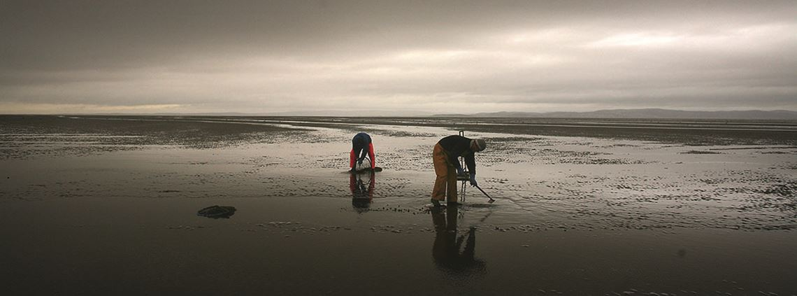 Improved legislation followed the deaths of cockle pickers in Morecambe Bay in 2004 ©Christopher Furlong/Getty Images