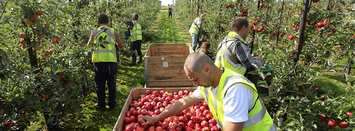 Agriculture needs access to foreign seasonal workers - and support from supermarkets ©Bloomberg/GettyImages