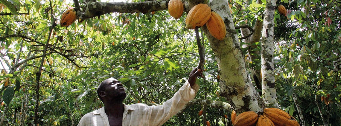 Cote d'Ivoire is the world's biggest exporter of cocoa ©Getty Images