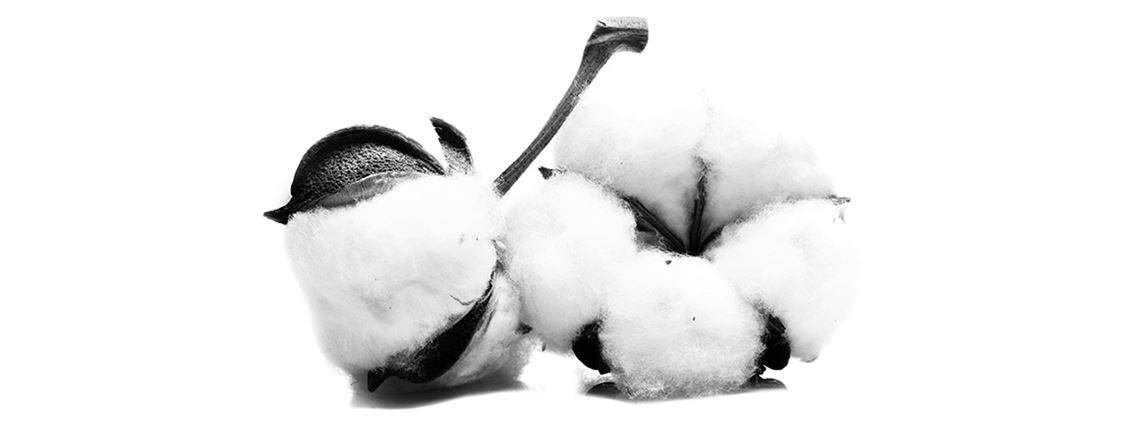 Few other resources are as closely tied to human history as cotton ©Valentina Razumova/AdobeStock