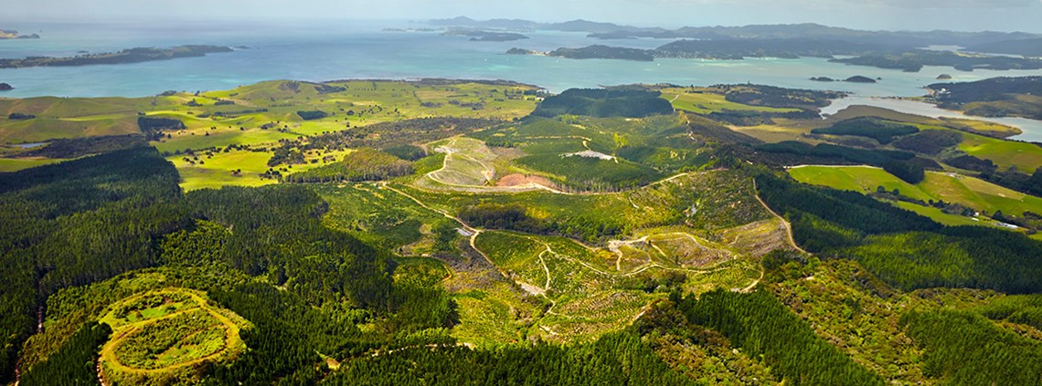 Timber in the deal will be primarily sourced from the Waitangi forest © Waitangi Mountain Bike Park