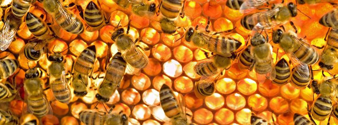 In a beehive 90% of bees do the same thing every day, but 10% do whatever they like ©123RF