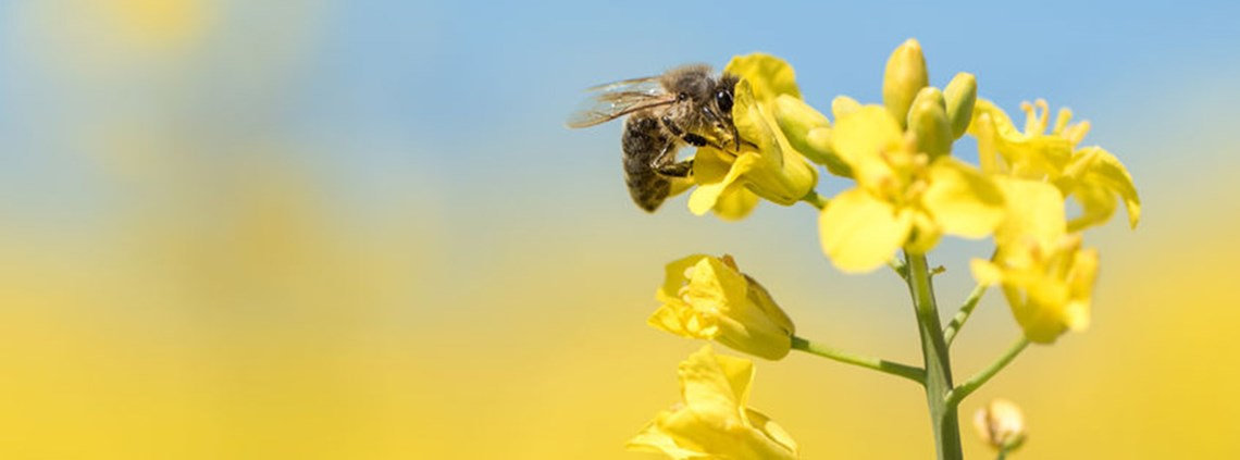 Pollinators are worth up to $577bn to agriculture © 123RF