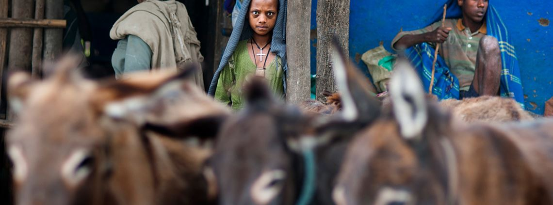Ethiopia is thought to be home to the largest number of donkeys © SIPA USA/PA Images