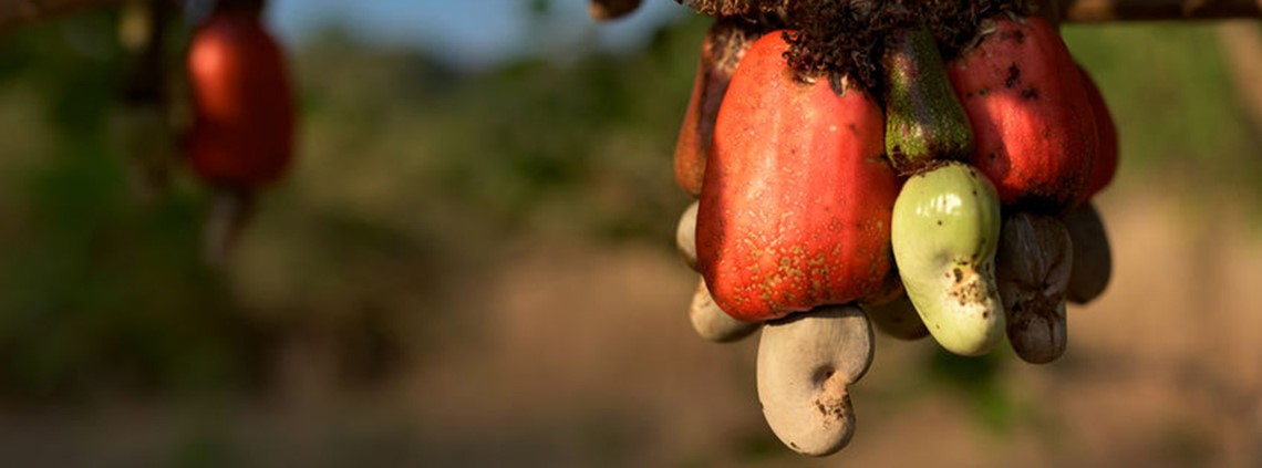 The Tanzanian government stepped in to set a price for cashew nuts © 123RF