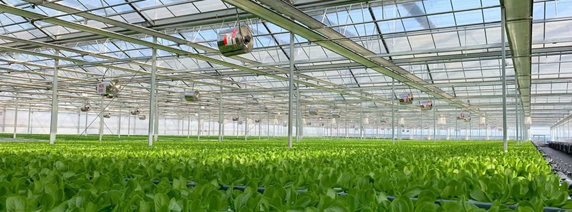 Mitsubishi and JD com open China's largest hydroponic farm - Supply