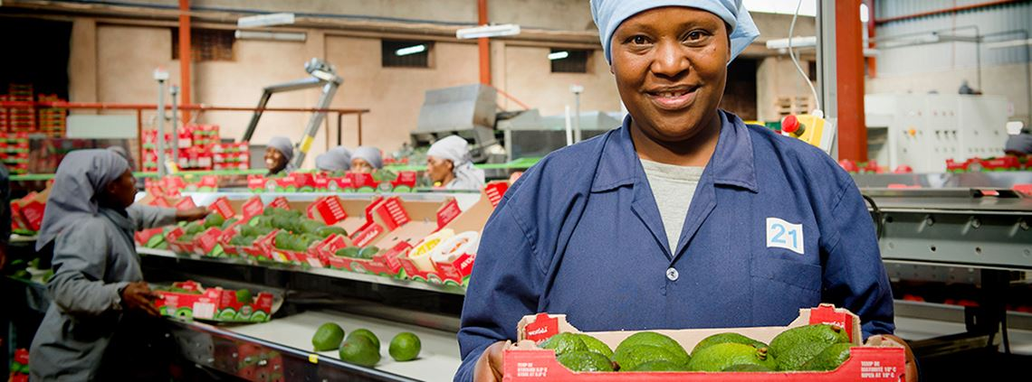 Currently 90% of Tanzanian avocados are exported to the EU © Finnfund