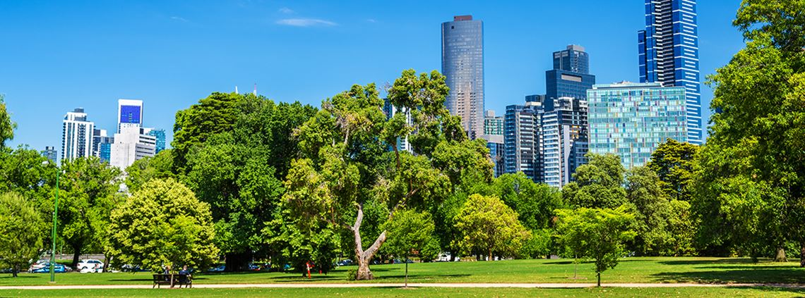 The council revealed $4.2m will be used to plant 3,400 trees and to care for 80,000 trees © Getty Images/iStockphoto