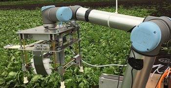 Vegetable-picking robot can identify the ripe and disease-free crops. © University of China