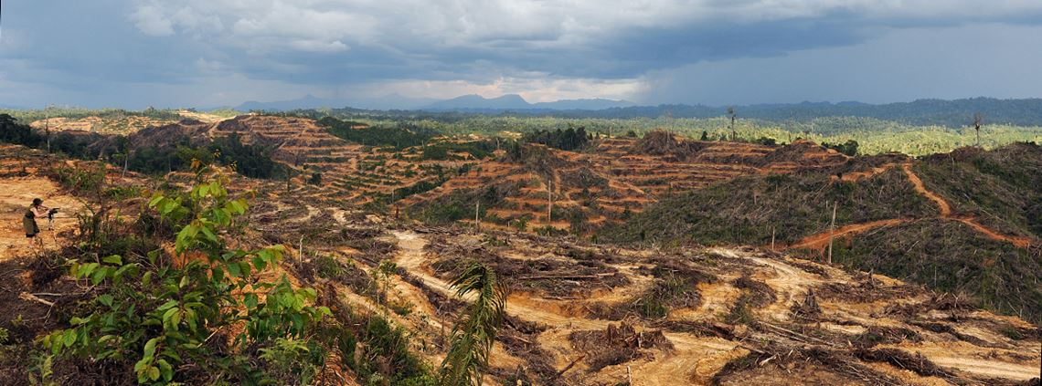 Firms reported the collective financial impact of deforestation could be $30.4bn © Khan/AFP/Getty Images