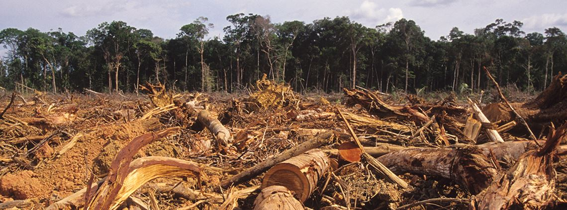 The European Commission set out priorities to reduce deforestation and forest degradation © Getty Images
