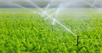 The agricultural sector has the largest water consumption globally. © GomezDavid/Getty Images