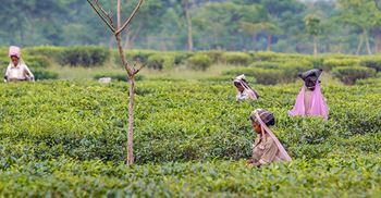 Access to clean water and sanitation is a top challenge for tea workers. © Nicolas Economou/NurPhoto/Getty Images