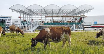 A floating dairy in Rotterdam boasts a herd of 32 cows ©Dario Kleimeer/Goldsmith Architects