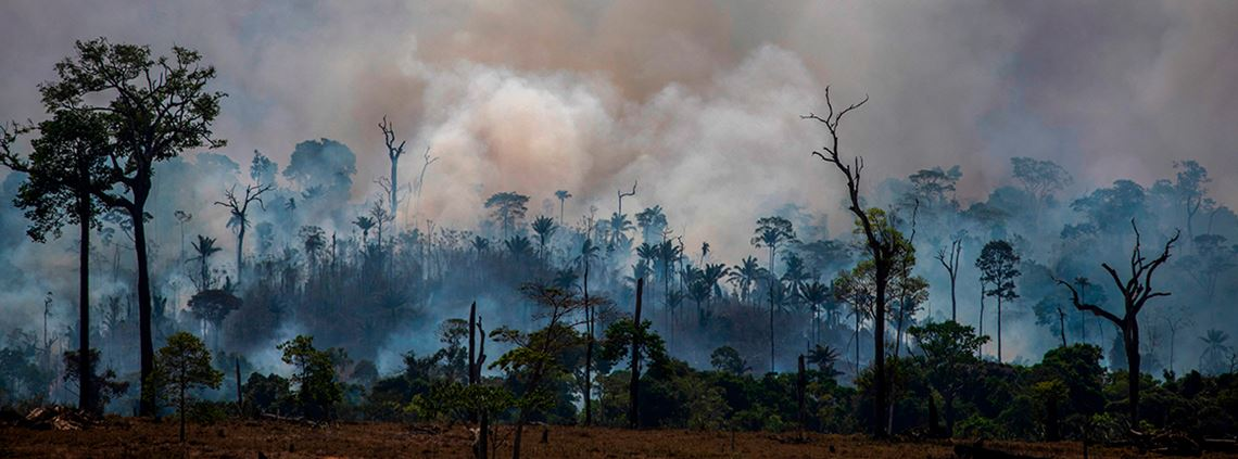 Fires in the Amazon are believed to have been started deliberately to clear land for cattle rearing © AFP/Getty Images