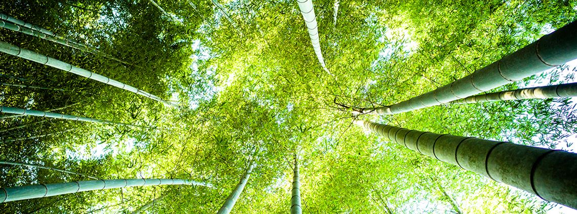 The global bamboo economy has been valued at $60bn © Marser/Getty Images