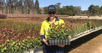 Approximately 6,000 trees will be planted at each of the government's research institutes, including Orange and Yanco institutes.