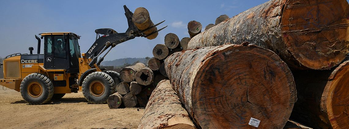 880 timber industry workers in Brazil have been rescued from forced labour © AFP/Getty Images