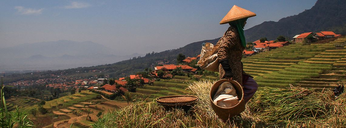 There are 150m smallholder farmers producing rice globally © SOPA /LightRocket/Getty Images