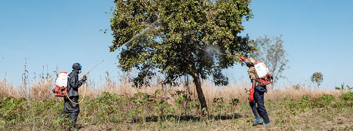 Soldiers in Uganda spray insecticide on trees where locusts swarm ©SUMY SADURNI/AFP via Getty Images