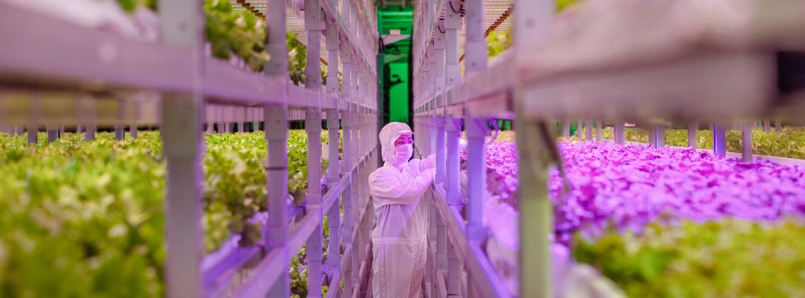 Interest in vertical farms has spiked since the coronavirus pandemic as produce can be grown year-round © Getty Images