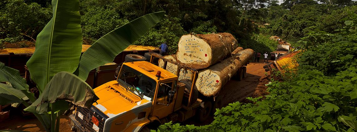 Illegal logging is having negative consequences © Brent Stirton/Getty Images