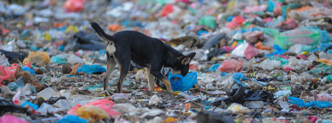 It will also ban single-use plastic bags © Pandu Hari S/Riau Images/Barcroft Media/Getty Images