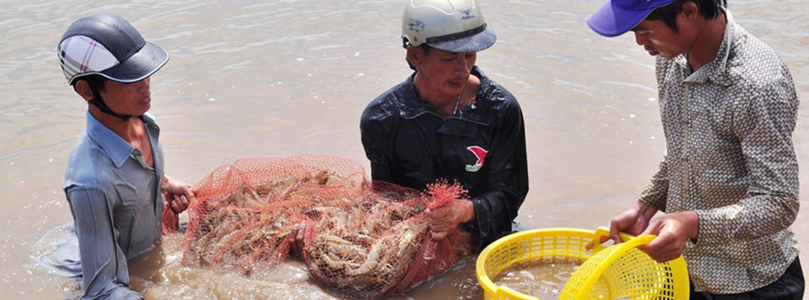 The seafood industry in Thailand suffers from widespread human rights abuses, including the use of child labour © 123RF